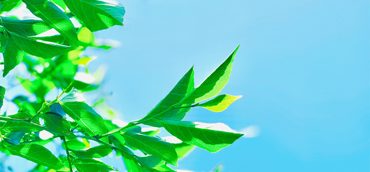 五月の新緑のイメージ